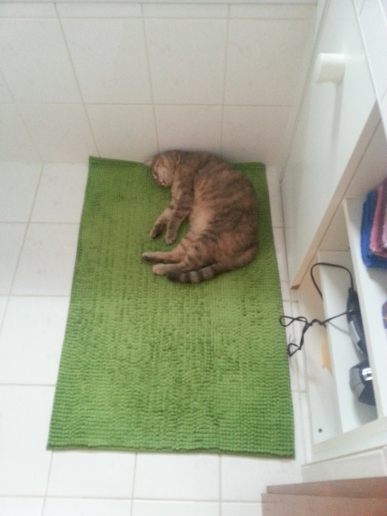 Mon Chat Dort Sur Mes Pieds avoir un chat - réglisse & myrtilles