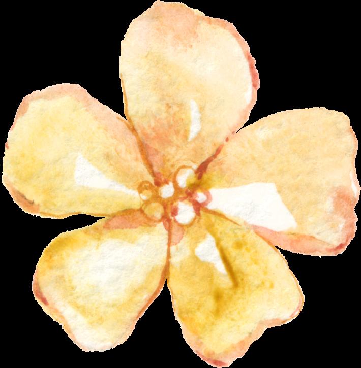 Lace & FlowersElements_02